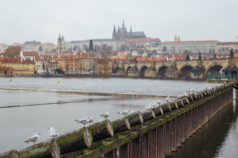 Travel_Prague_ (9 of 26)